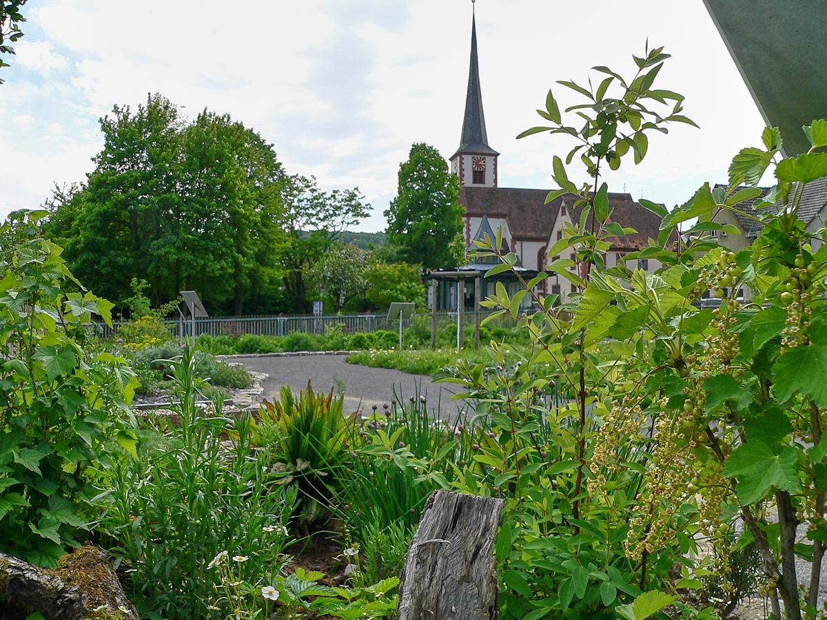 NaturSchauGarten in Himmelstadt | Foto: B. Schneider