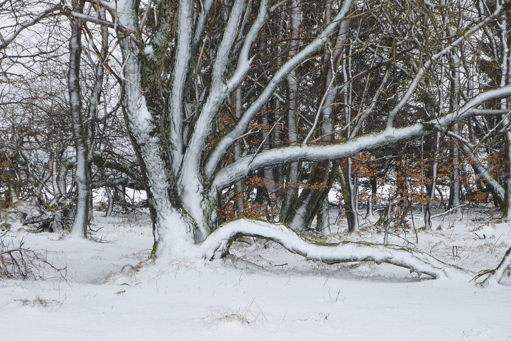 Schnee um die Osterzeit ist auf den Höhen der Rhön nicht ungewöhnlich. Er verzaubert die Landschaft, die wie gemalt wirkt. | Foto: B. Schneider