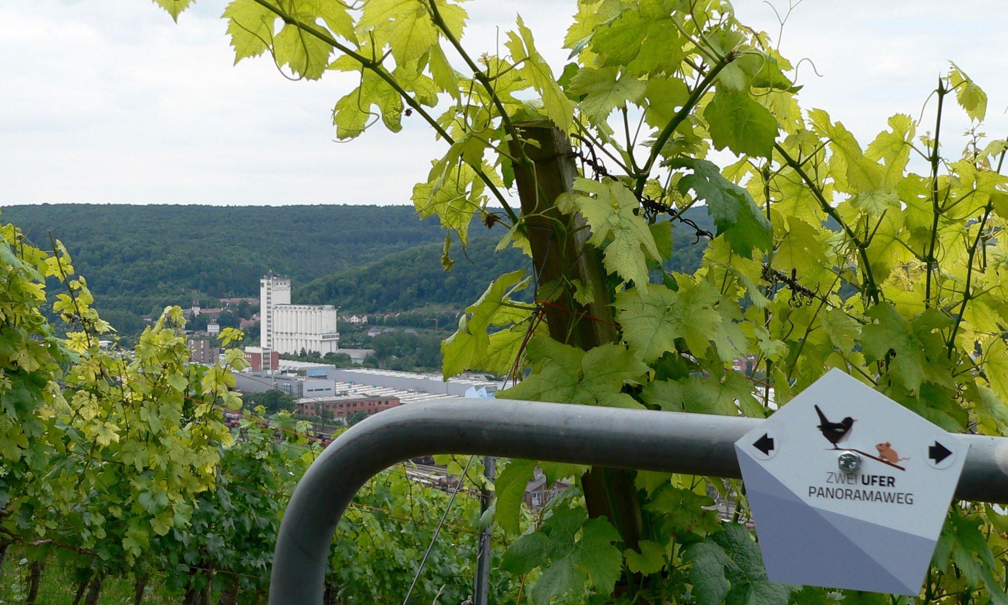 Alles auf einen Blick auf dem ZweiUfer-Panoramaweg: Weinbau, Industrie und Waldwirtschaft. | Foto: B. Schneider