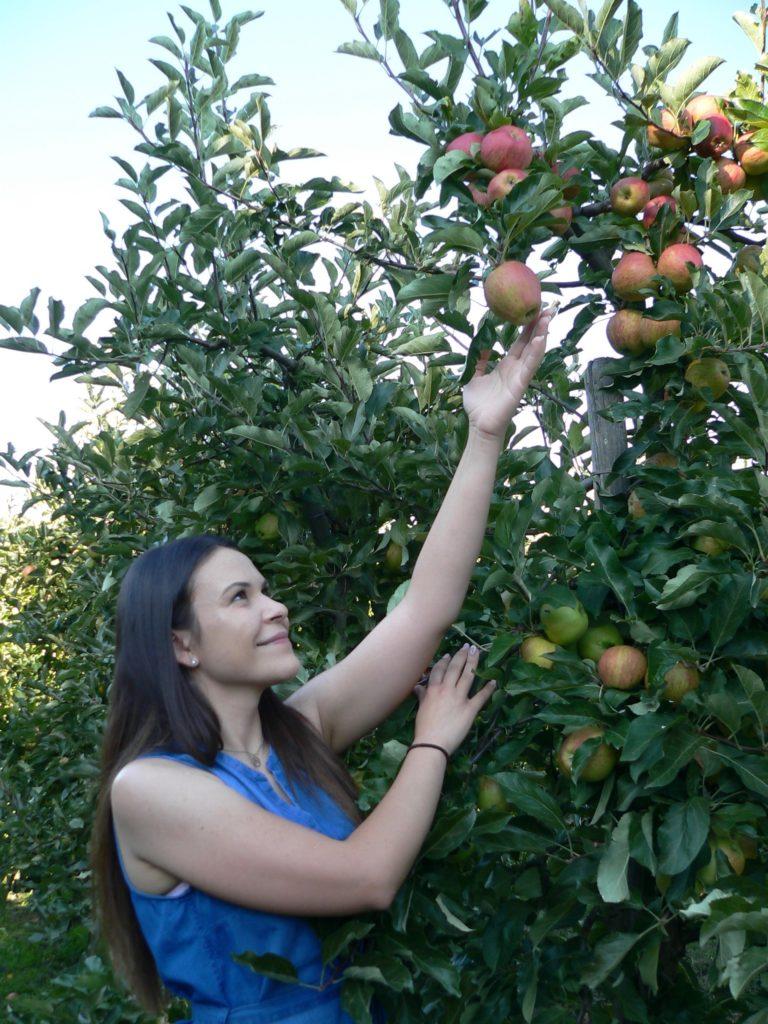 Am allerbesten schmecken die Äpfel der Apfelkönigin Marion direkt vom Baum. | Foto: B. Schneider