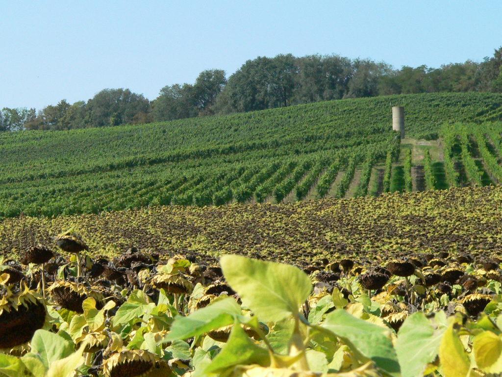 Abwechslungsreich ist hier die Flur mit Wald-, Wein-, Acker- und Obstbau.