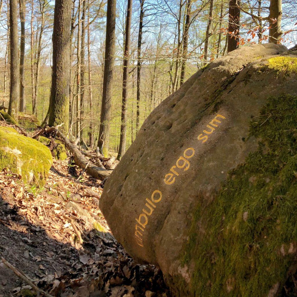 """Mit """"goldenen Worten"""" hat der Künstler und Philosoph herman de vries sich im Steigerwald verewigt."""